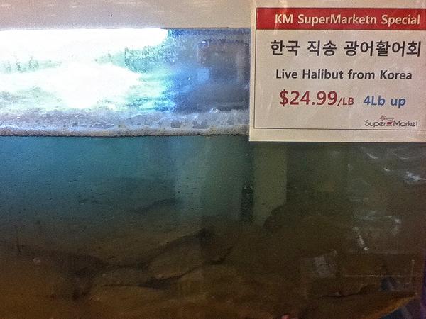 Korean halibut flat fish